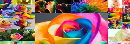 bli-creativita-photowork-happy-roses.jpg